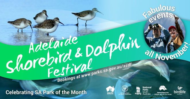 Adelaide Shorebird and Dolphin Festival, shorebirds, dolphins, festival, free, St Kilda, November, free things to do