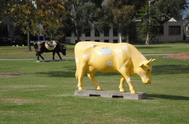 Art cows in Shepparton