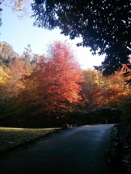 Autumn leaves at Cataract Gorge