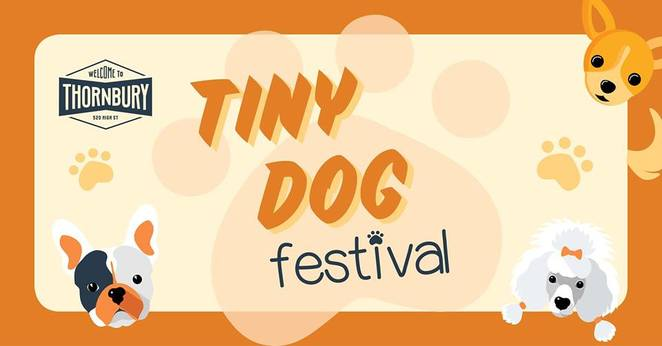 Dog Friendly, Near Melbourne, Northcote, Dogs, Fun Things to See, Unusual Events