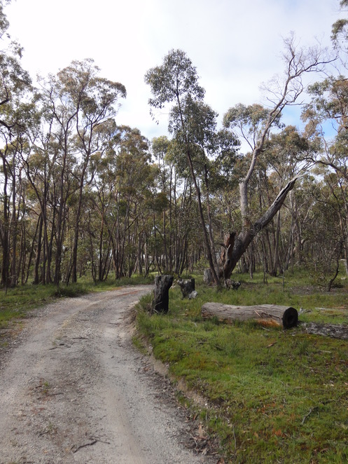 Forest Have B&B Beaufort Victoria accommodation vegan food