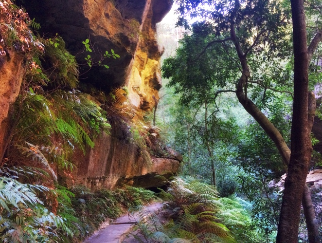 Grand canyon track, blue mountains