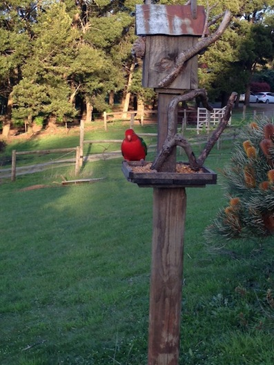Hoddles Hideaway Farm Stay Bed and Breakfast