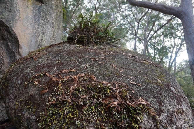 Look for lichens and orchids