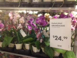 orchids ikea Mothers Day