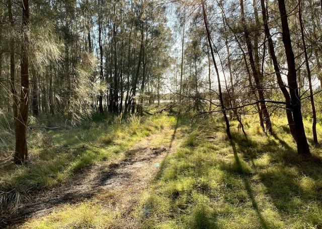 Just after sunrise is a wonderful time for a walk through Pinklands Bushland Reserve