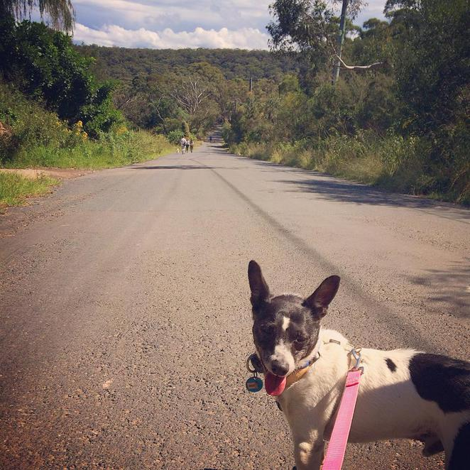 scooby, dog, doggie, rescue, ingleside, walking, charity, organisation, escape the city, leisure, outdoors, recreation