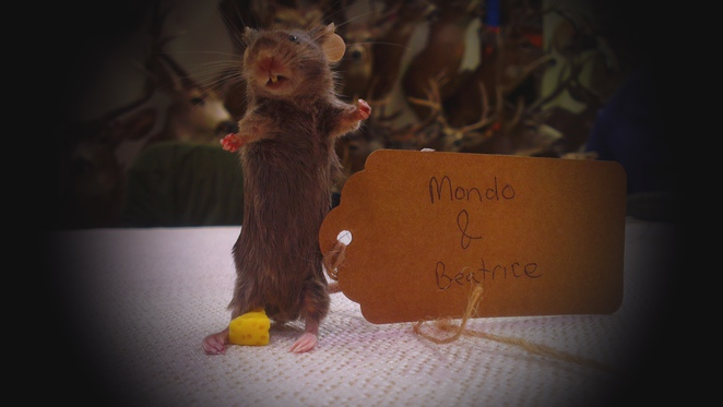 taxidermy, mouse, cheese, stuffed, toe tag