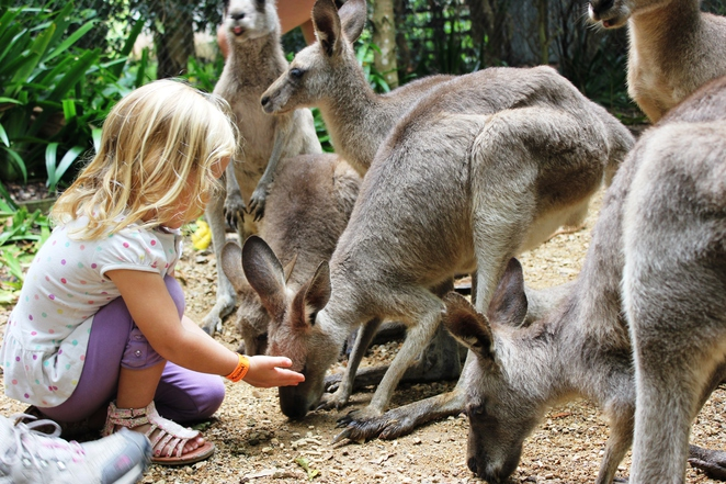 Zoo, feed kangaroos, wildlife, family, kids, school holidays