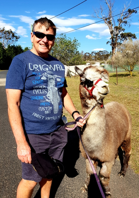 Alpaca, nature, family, fun, farm visit, animal, Australia, Southern Highlands