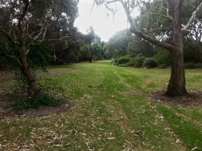 Ash wood Close, Ashwood Reserve, Ocean Grove, Park, Picnic Spot, Bellarine, Wetlands, Birdwatching, walking track, Walking trail, Tareeda Way, garden, native plants, geelong council,