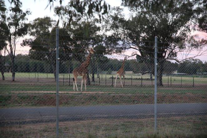 Dubbo, Taronga Western Plains Zoo, Savannah Cabins, family friendly accommodation, accommodation at the zoo, safari experience, Dubbo Zoo