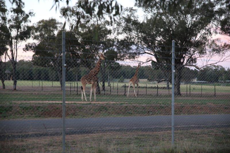 Savannah Cabins At Taronga Western Plains Zoo New South