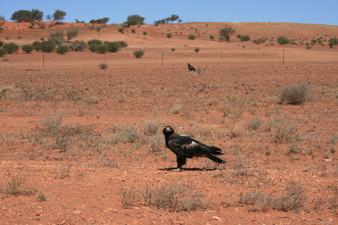 eagles outback northern territory