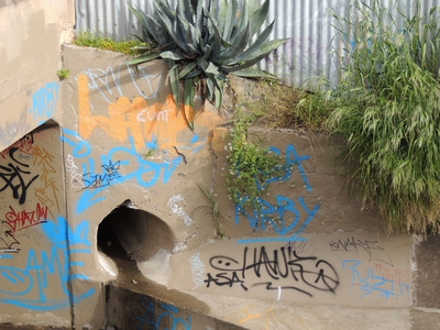 laneways, adelaide, street art, gleaning, urban exploration, dog friendly, history, gardening, mysterious, hidden adelaide