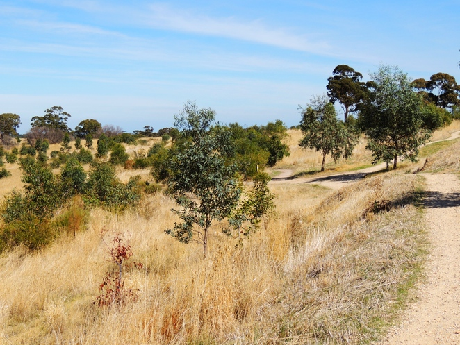 mountain biking, hiking in the, bicycle trails, adelaide hills, off leash dog, south of Adelaide, bike trail, craigburn farm, sturt gorge, native birds