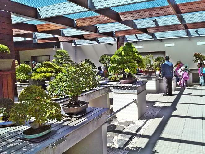 national bonsai and pening collection, canberra, national arboretum, gardensing, plants, bonsai, seniors, family,