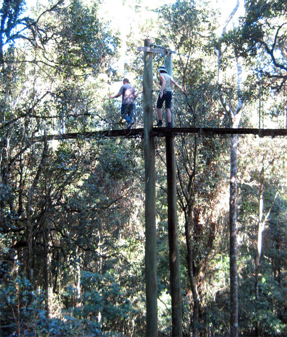 Free tree top walk at O'Reilly's