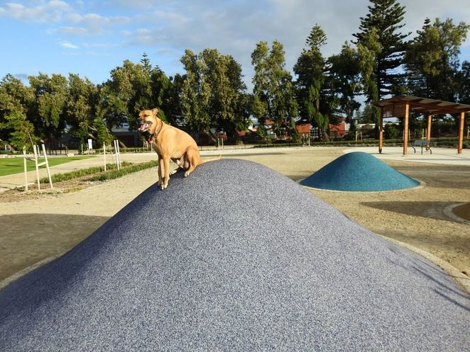 Roy Marten Park, Taperoo, dog park, playground, play, kids, dogs, park, free, king of the castle