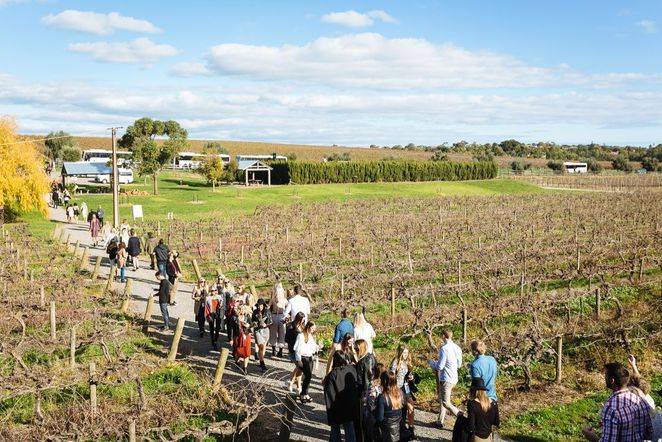 sea and vines, mclaren vale sea and vines, sea and vines festival, mclaren vale, food and wine, fun things to do