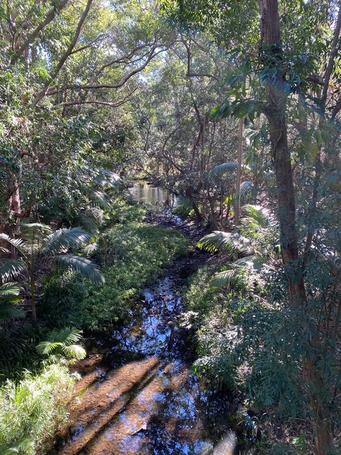 The bushland by the creek