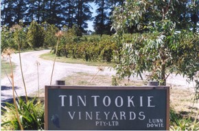 Tintookie Vineyards