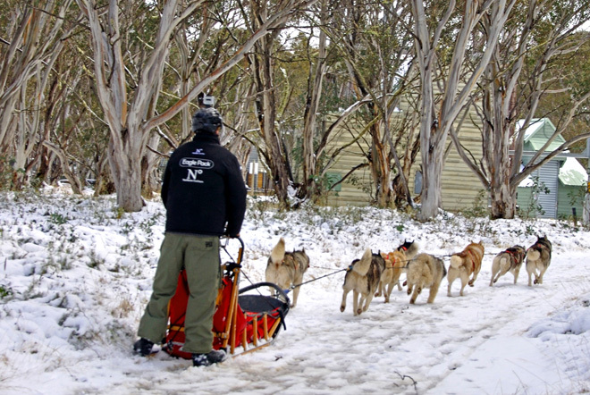 Victoria Melbourne Falls Creek High Country Snow Snowfields Dog Dogs Sled Racing