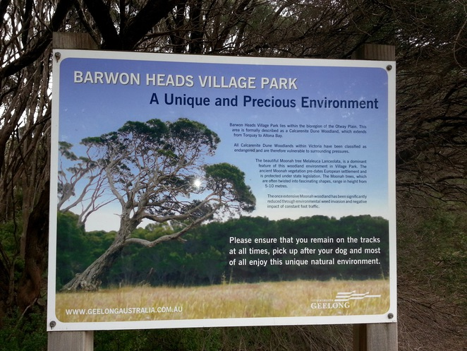 Barwon Heads Village Park, Moonah trees