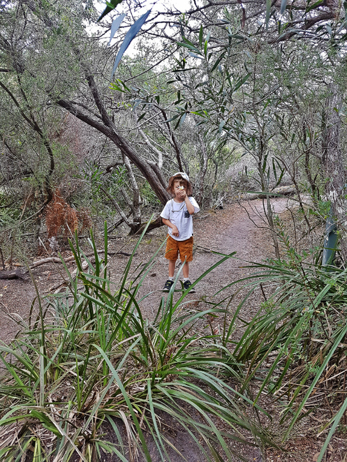 Bushwalk with Kids on the Two Valleys Trail
