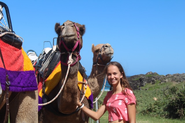 Camel rides, ride camels in Australia, Camel rides at Coffs Harbour, What to do Coffs Harbour, things to do in Coffs Harbour, best things Coffs Harbour, beach camel rides, best family activities in Australia, family activities Coffs Harbour, bucket list ideas