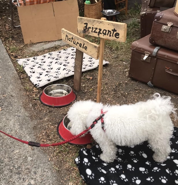 dogs,allowed,at,these,markets