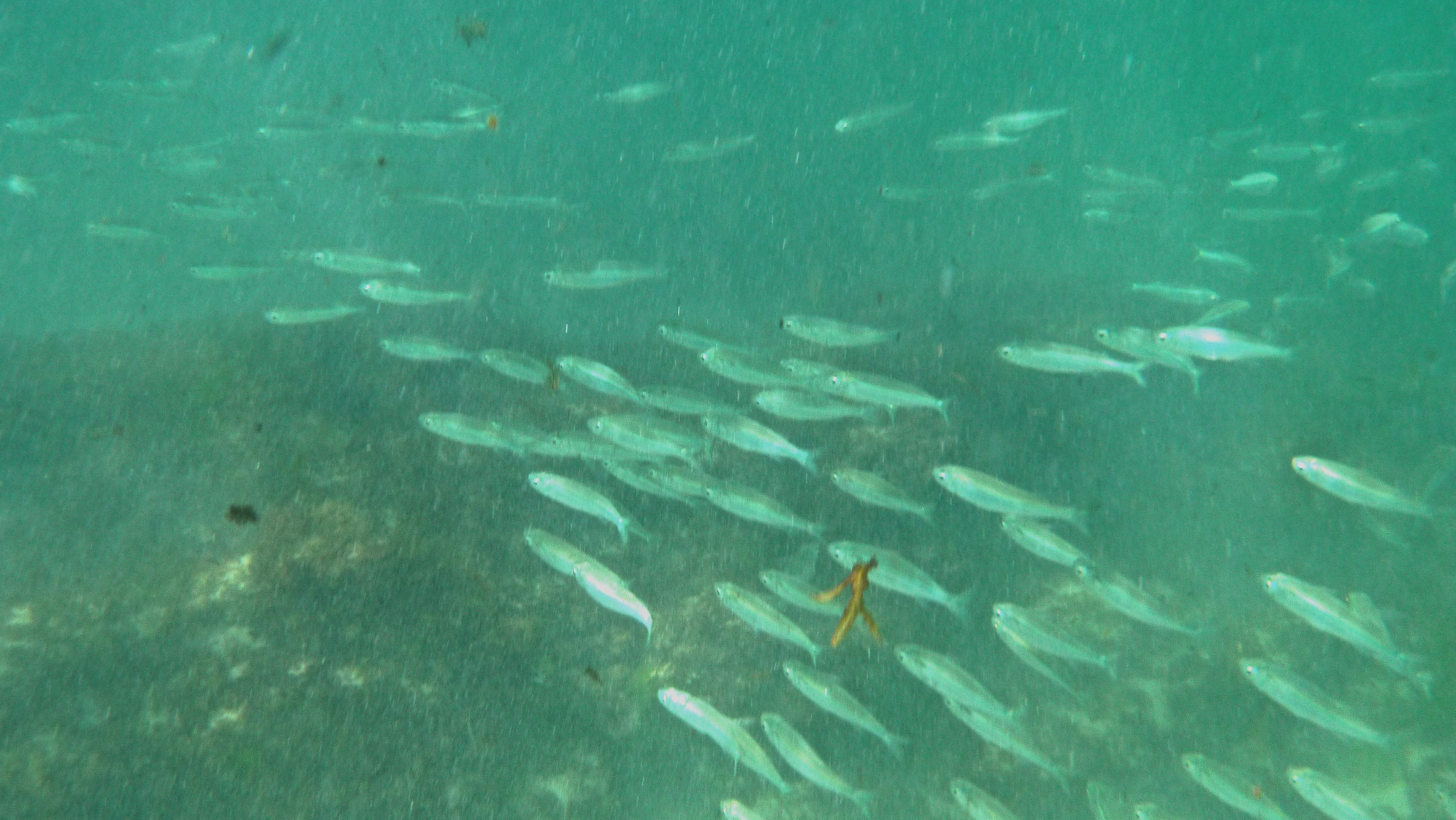 Good snorkeling beaches in perth perth for Pool of fish