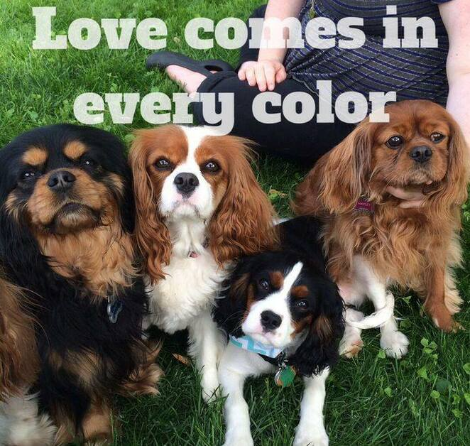 icks day 2019 melbourne meet up, international cavalier king charles spaniel day melbourne meet up 2019, community event, fun things to do, dog lovers, free event, elsternwick park, pet owners, walk with your pet, off lead romp time, heaps of fun, brighton, cavalier and friends welcome