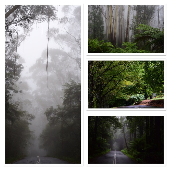 Mount Wilson, Mount Irvine, Fern Trees, mist, mountain, blue mountains, bells line of road