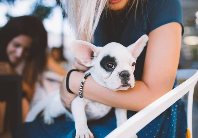 newbarket dog fest, newmarket village, Northside, Brisbane, northern suburbs, dog event, dog friendly, free, dog parade, dog yoga, trick and obedience workshops, pet photography, dog first aid, food, live music