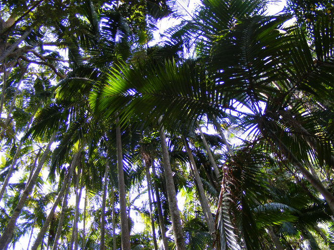 Palm trees in the middle of a rainforest says