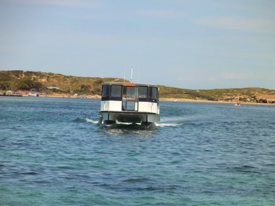 penguin island, penguin island review, penguin island conservation park, rockingham tourist attractions, perth tourist attractions, dolphin watching wa, snorkelling close to perth