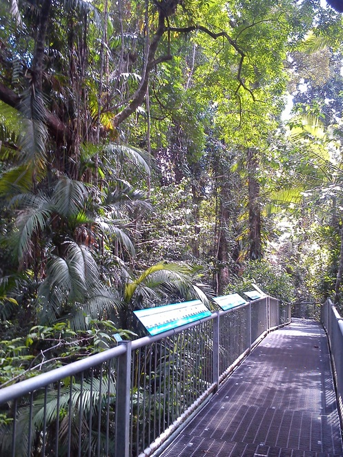 rainforest discovery centre, aerial walkway, Daintree rainforest, things to do near Cairns, family friendly, far north queensland