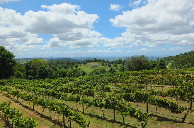 Stomp 2019, Flame Hill Vineyard, Montville, celebrate successful harvest and vintage, al-fresco style lunch, ocean views, mountain views, Shiraz vineyards, wine aficionados, food lovers, live entertainment, $85 per person, 18 years and over, fun with a capital F