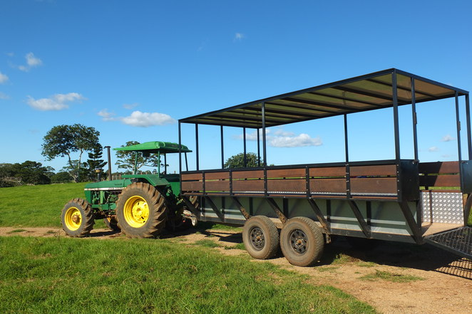 Tractor rides, Maleny Dairies, Guernsey cows, farm tour, complimentary taste testing, every day except Sundays, Milkbar, grassed area, giant sized Chess set, mob of emus, Devonshire Tea and Scones, picnic spots, barbecue facilities, picnic basket, family, all ages