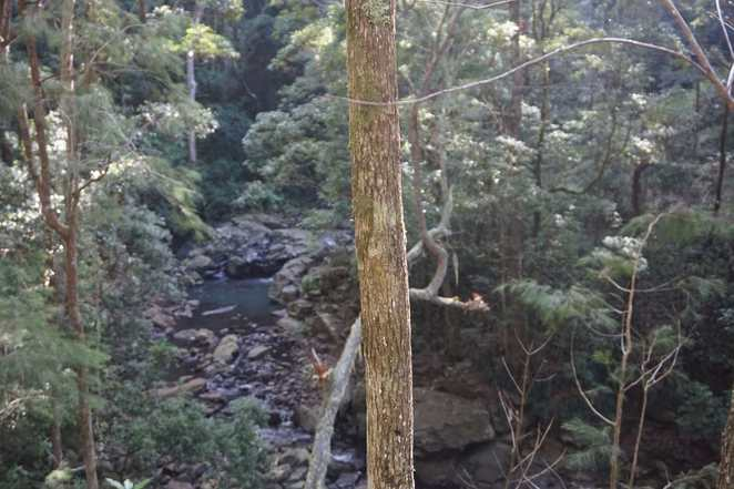 Trees on Cascades Falls walk