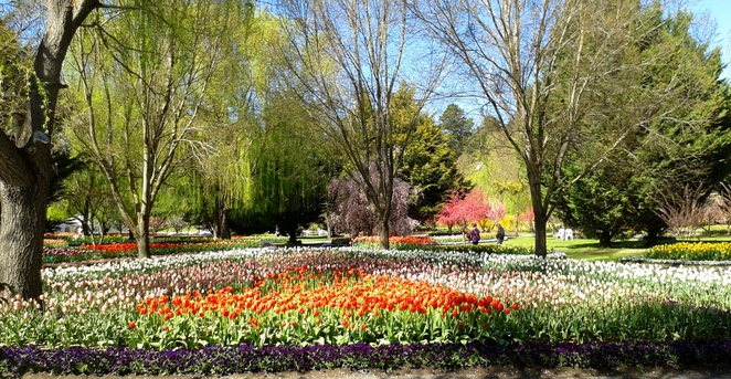 tulip top gardens, 2017, sutton, floriade, flower festival, near canberra, ACT, NSW, federal highway, flowers, tulips
