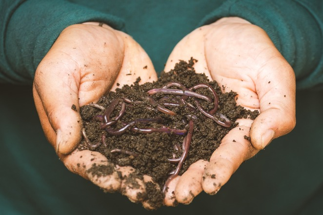 worm farming for beginners 2020, composting for beginners 2020, frankston city council, online course, free events, gardening, online workshop, worm juice, environmental concepts, entertaining and informative session, facebook live