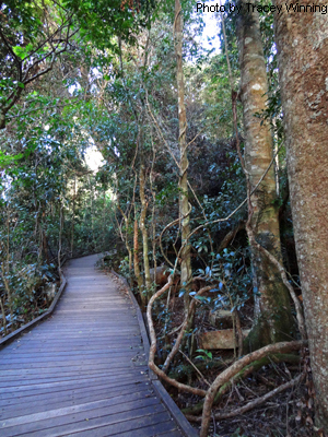Booyong Walk, Green Mountains, Lamington National Park, OReillys walks