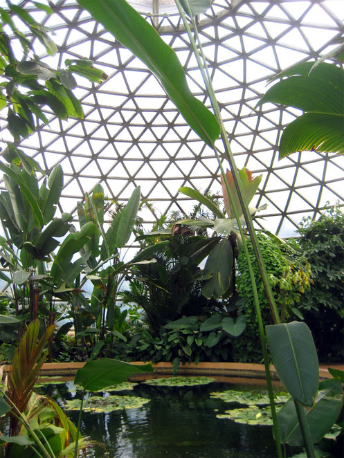 The tropical dome at the Mt Coot-tha Botanic Gardens