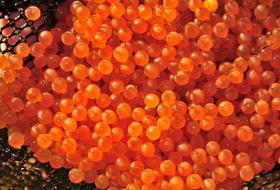Buxton hand milked trout caviar
