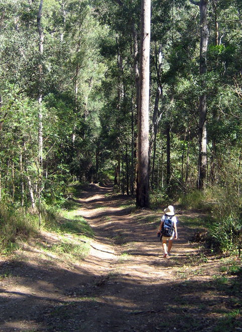 Hiking at Enoggera Dam