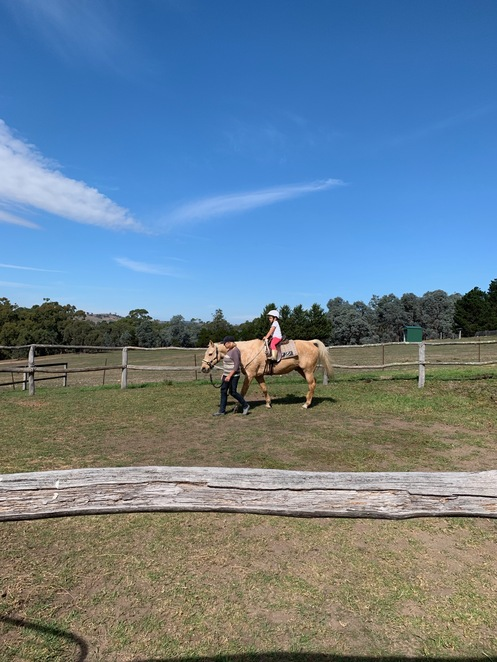 farm animals, farm activities, horse riding, paddock, family activity, what to do with kids