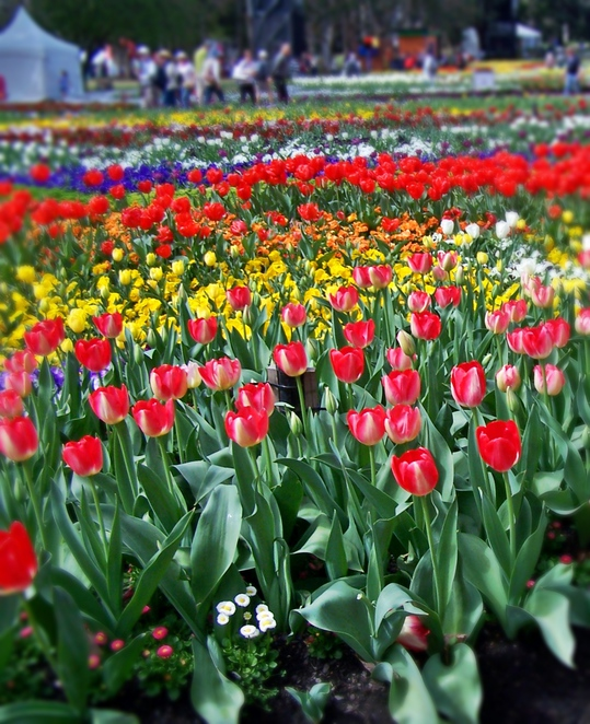 floriade, 2016, act family and community day, ACT, whats on, public holidays,