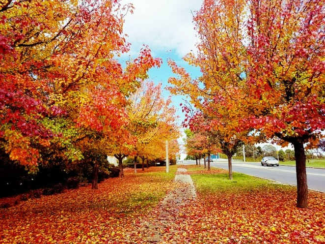 How to love autumn in Canberra beyond the Instagram-worthy photo
